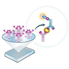 Antibodies, Proteins & ELISA Kits