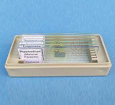 Beginners Protozoan Prepared Slide (Set of 6)