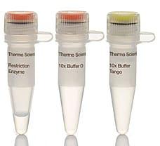 Bme1390I (ScrFI) restriction enzyme