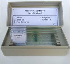 Flower Placentation Prepared Slides (set of 5)