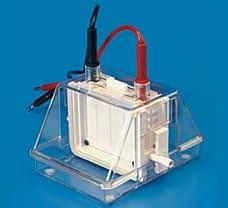 Mini Dual Vertical Electrophoresis Unit-7080