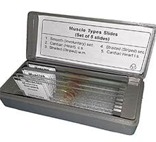 Muscle Types Prepared Slide