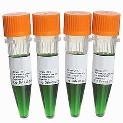 PCR Master Mixes