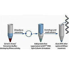 RNA Purifications and Extractions