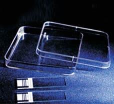 Sterile Disposable Square Petri Plates, 120 X 120 mm-PW050-1x100NO