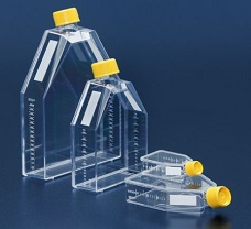 Tissue culture Flask -25cm2- VENT